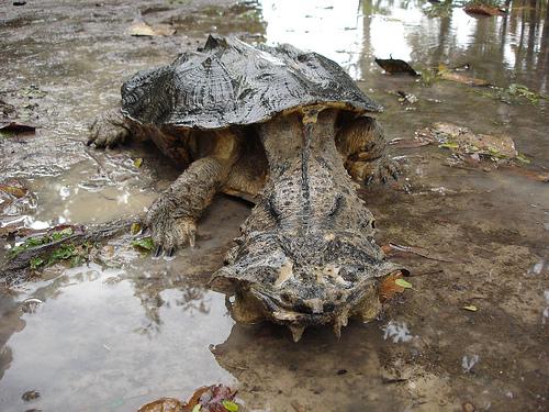 Imagenes o fotos de los animales mas raros del mundo