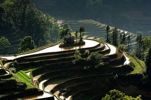 Terrazas Yuanyang