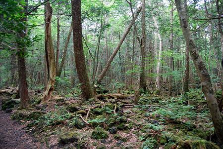 El bosque de Aokigahara Aokigahara-jukai