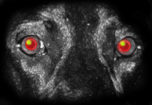 Bestiario nocturno. Los perros negros, mitos y leyendas.