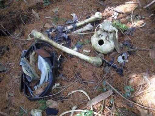 El bosque de Aokigahara, la meca de los suicidas en Japón.[ADVERTENCIA, imagenes fuertes, abstenerse personas sensibles] Bosque-suicida3