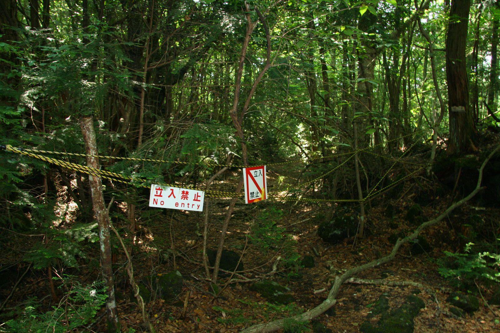 El bosque de Aokigahara Img_7049