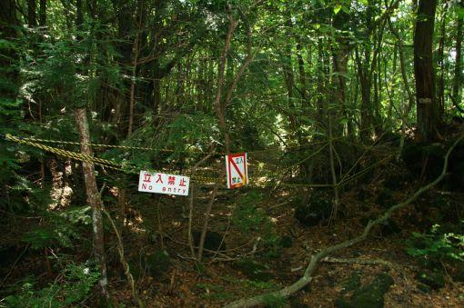 El bosque de Aokigahara, la meca de los suicidas en Japón.[ADVERTENCIA, imagenes fuertes, abstenerse personas sensibles] Img_7049