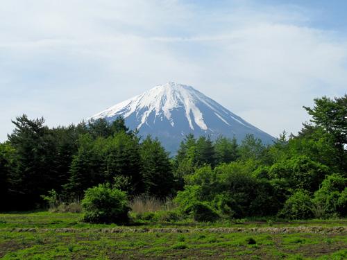 El bosque de Aokigahara Monte_fuji