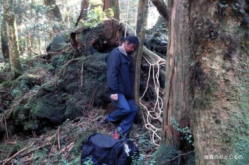 El bosque de Aokigahara, la meca de los suicidas en Japón.[ADVERTENCIA, imagenes fuertes, abstenerse personas sensibles] Oakigahara_japon