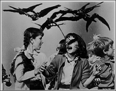 Pájaros agresivos, el ataque de las aves cabreadas.