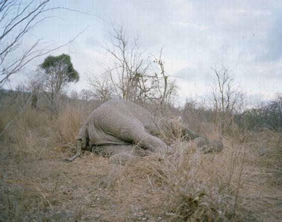Cómo comerse un elefante en 107 minutos