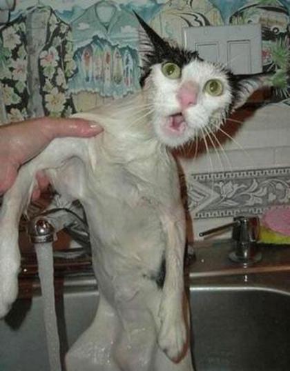 El undécimo mandamiento: No mojarás a tu gato
