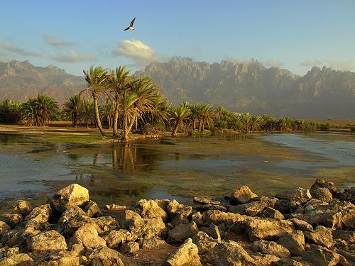 Planeta insólito. La isla de Socotra