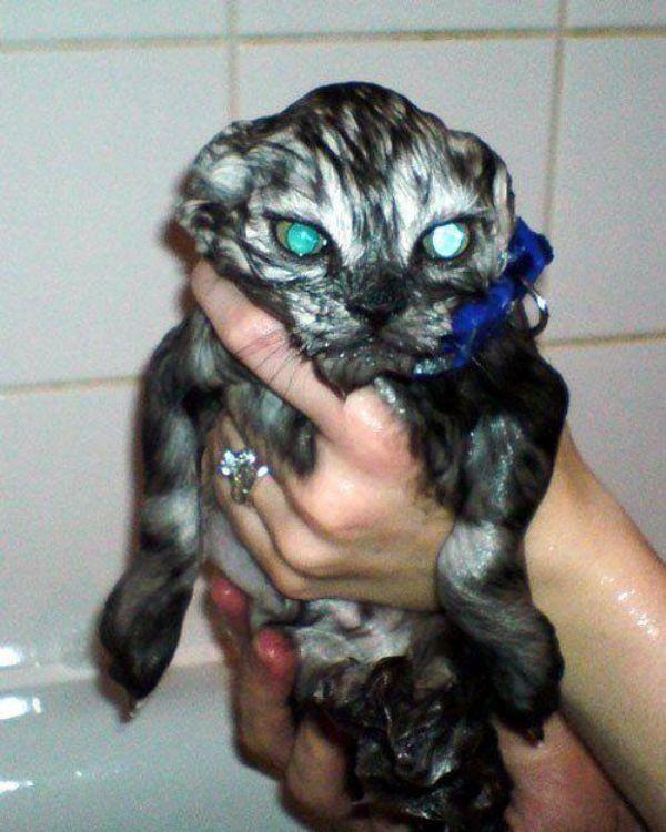 Gatos pasados por agua!