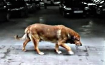 perro hachiko