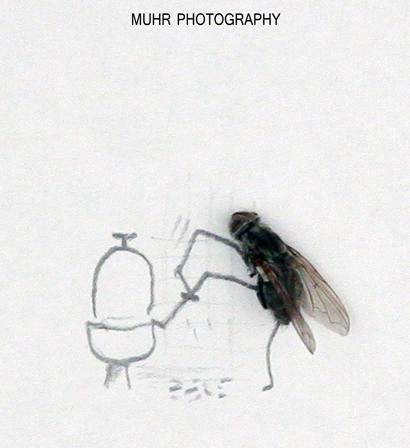 Cuando las moscas muertas son las modelos del fotógrafo