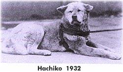 perro gaucho