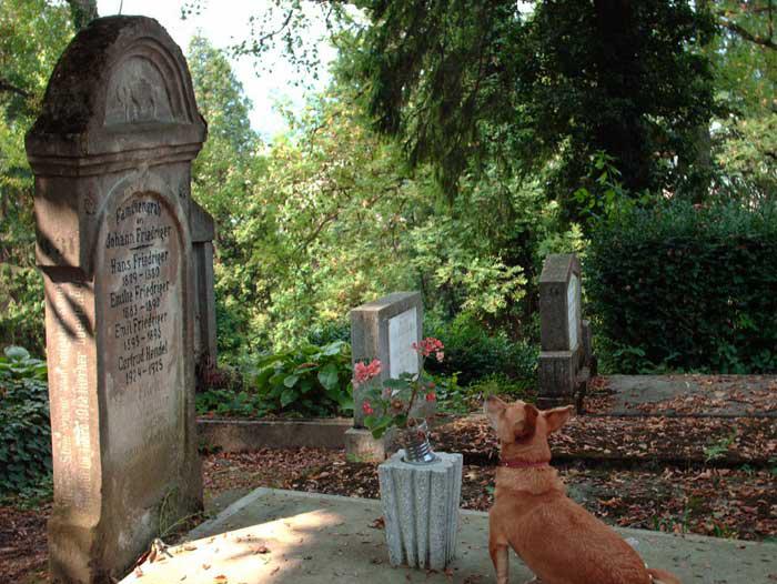 Los perros que son fieles a sus dueños