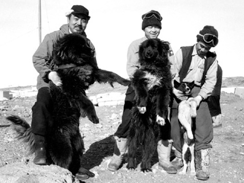 La historia de Taro y Jiro, los perros más famosos de Japó