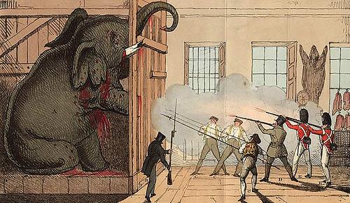 Cuando los elefantes eran condenados a muerte.