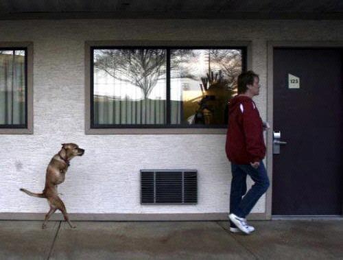 Faith, el perro que aprendió a caminar erguido.