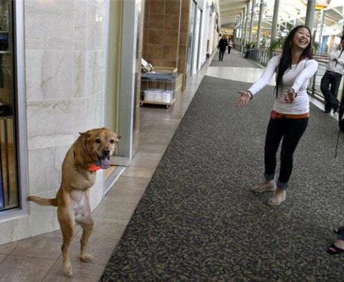 La historia de Ayron, un perro gravemente herido que