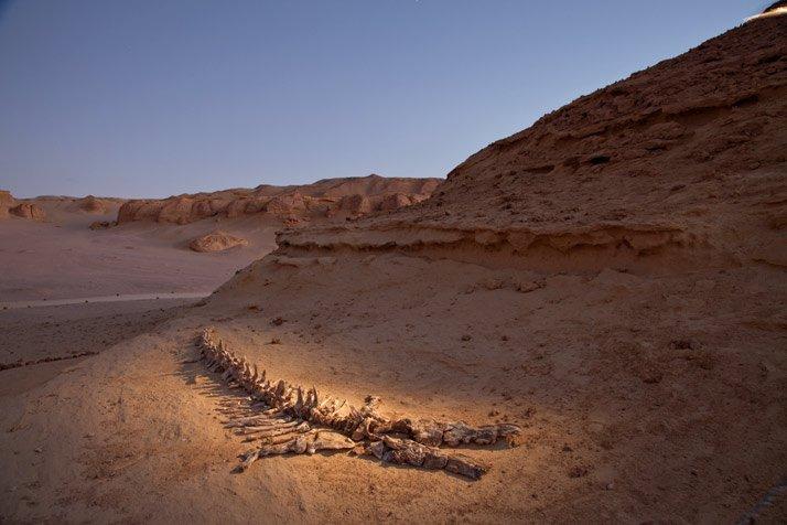 Planeta mágico: Wadi Al-Hitan, el valle de las ballenas