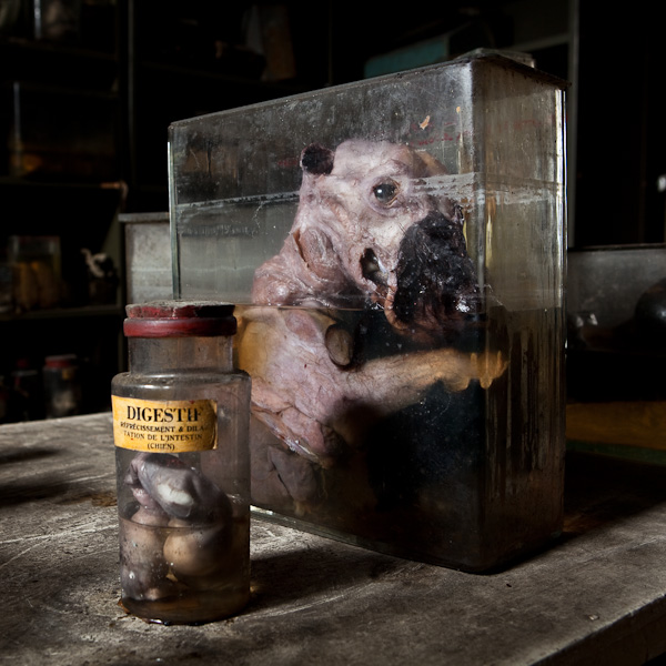 Los tenebrosos laboratorios de experimentación animal Experimentos-formol-fetos-veterinaria