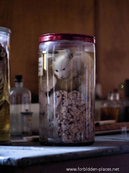 Los tenebrosos laboratorios de experimentación animal Gato-formol-veterinaria-abandonada