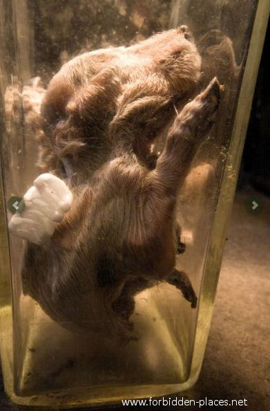 Los tenebrosos laboratorios de experimentación animal Perro-formol-abandonado