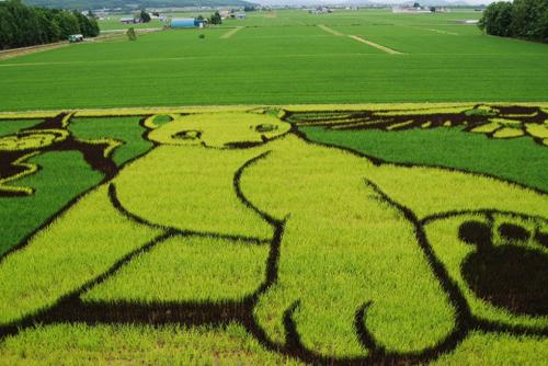 arrozales japón