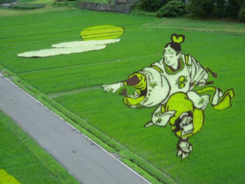 Cosas que hacer en un campo de arroz