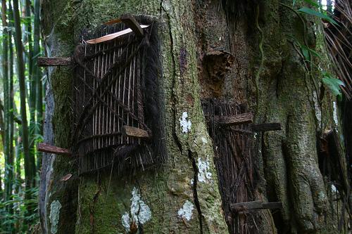 Los Toraja y los árboles de los niños muertos.