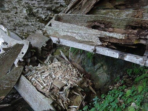 Los Toraja y los árboles de los niños muertos.-http://tejiendoelmundo.files.wordpress.com/2011/04/tana-toraja-4.jpg?w=510&h=382