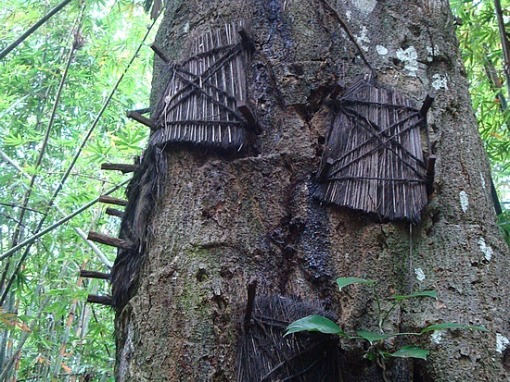 Los Toraja y los árboles de los niños muertos.-http://tejiendoelmundo.files.wordpress.com/2011/04/tana-toraja.jpg?w=510&h=382