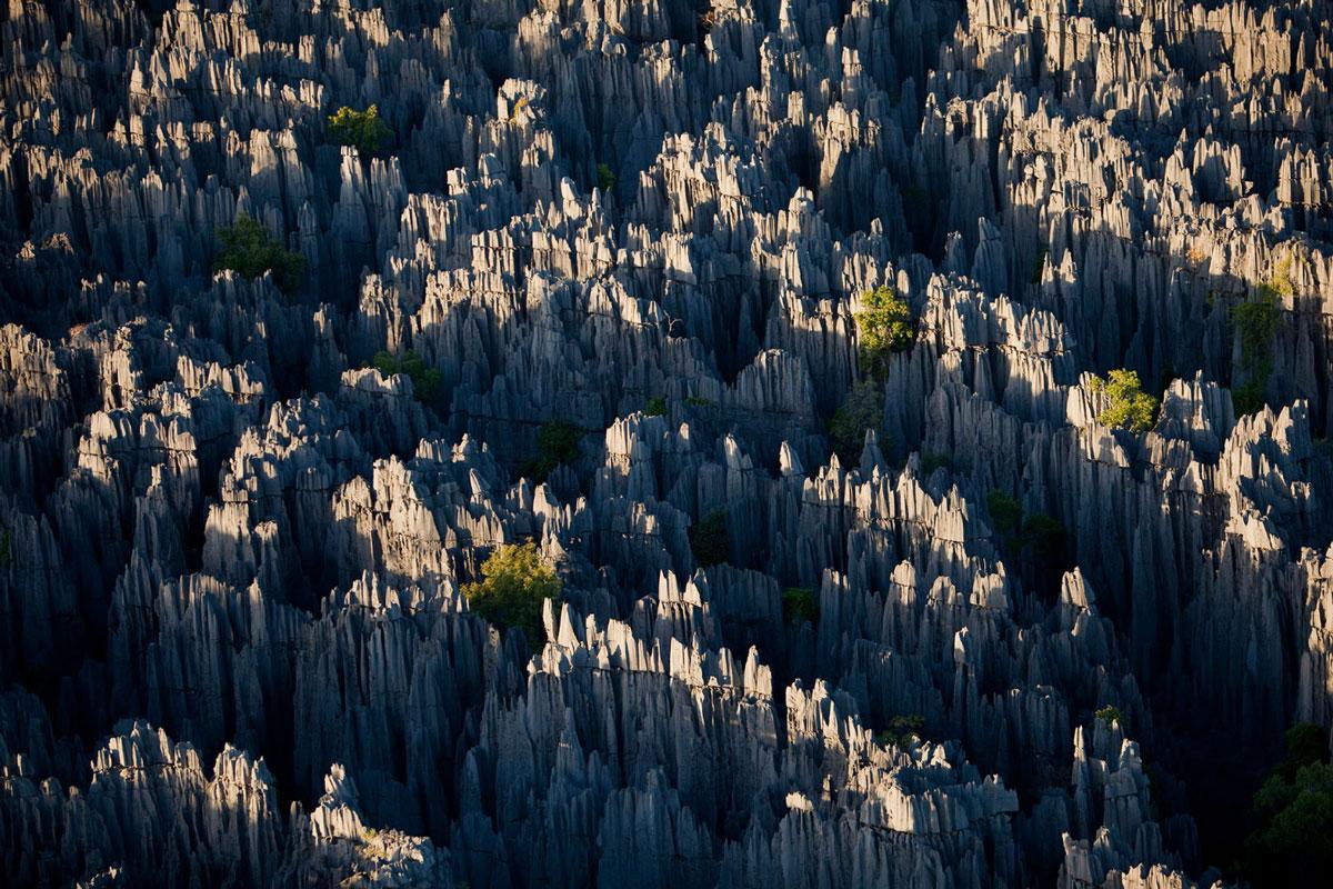 Planeta mágico: El bosque de piedra de Madagascar.