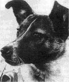 La historia de Laika la perrita astronauta.