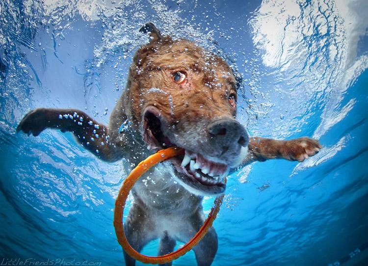 Mascotas bajo el agua