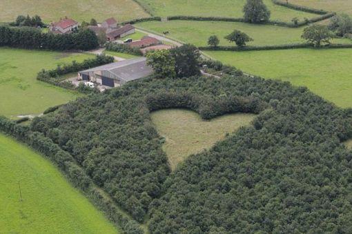 El hombre que sembró 6000 árboles en memoria de su esposa